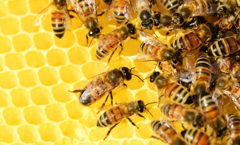 فوائد شمع عسل النّحل