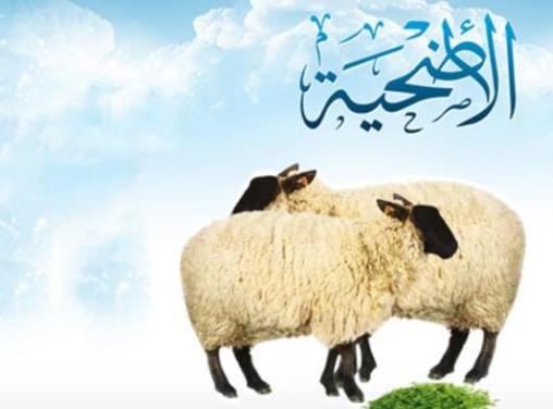 شروط اضحية عيد الاضحى المبارك